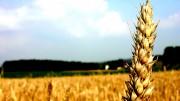 diapo_agriculture
