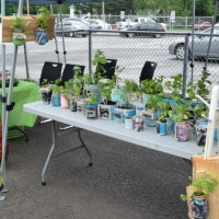 L'entreprise Les rayons de soleil de Maya-Soleil, 6 ans, qui fait pousser ses propres fines herbes dans de petits pots Masson et cannages recyclés.