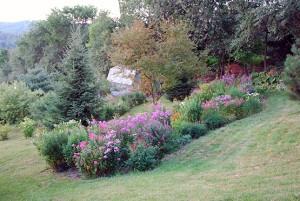 Photo : Diane Brault; Prévost, vue sur le terrain en 2007. – Le reboisement va bien grâce au compostage intensif. Ajout de fleur vivace pour les insectes butineurs.