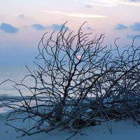 Muthaafushi, Baa Atoll. – Photo Diane Brault